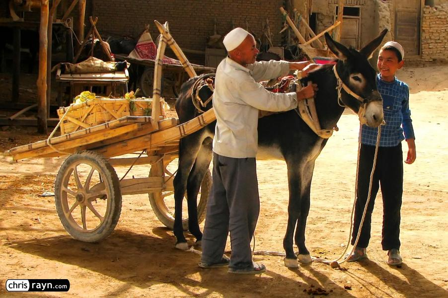 Donkey cart in the old town of Yarkand